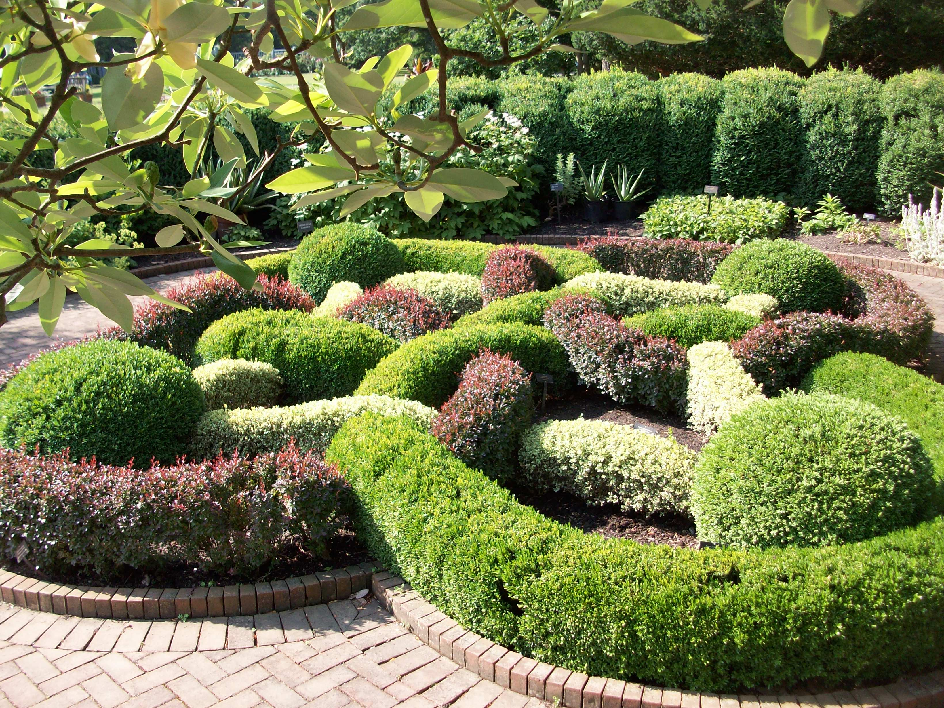 Spiering Co Striking Topiary