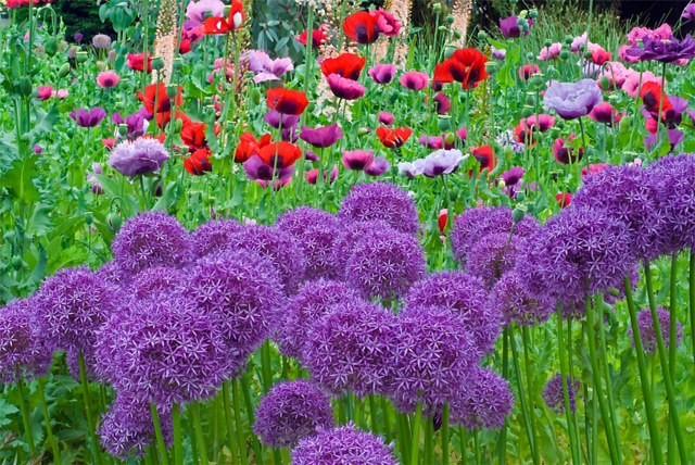 Spiering Co Create your own Cutting Flower Garden
